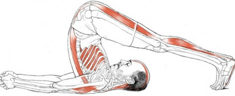 Leslie Kaminoff's YogaAnatomy.net Newsletter
