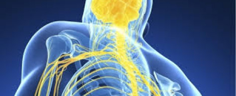 RECOVERY? ARE YOU GETTING IT? The Nervous System & Endocrine System Revealed