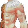 Fascia: Your Body of Water In A Flowing State of Movement